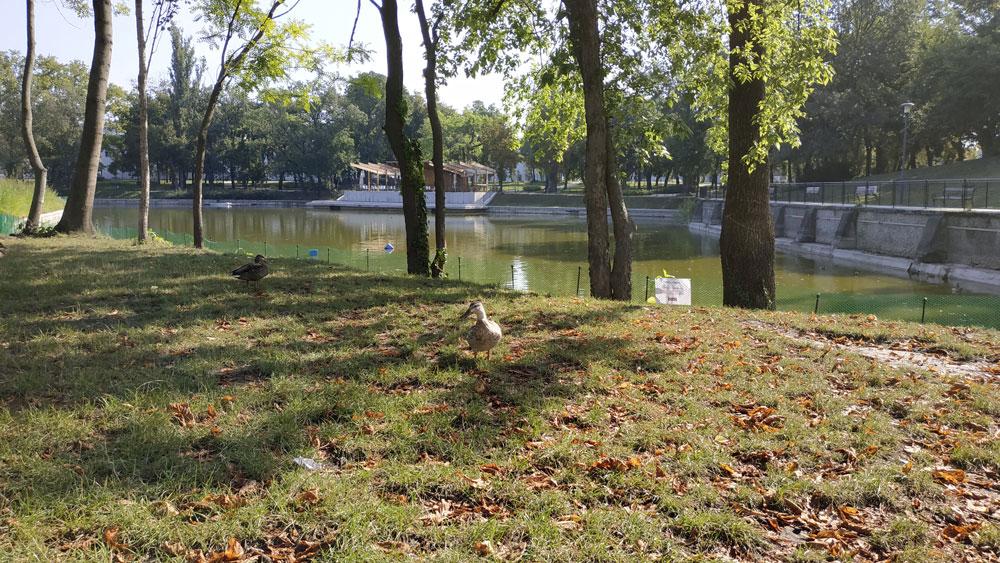Csónakázó tó kacsákkal az Orczy Parkban