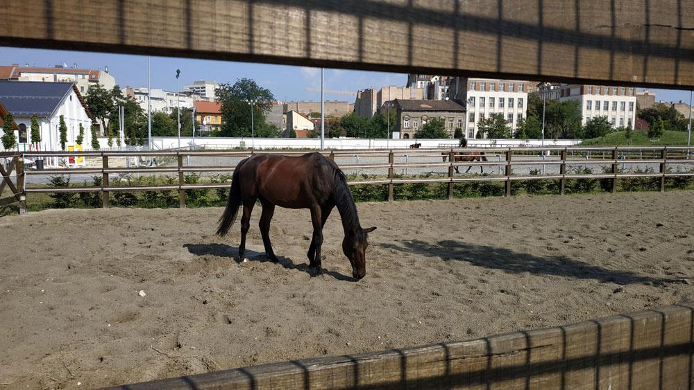 Tágas lovarda és lovaglás az Orczy Kertben